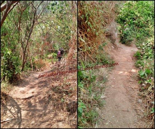 Jalan Lintas Hutan